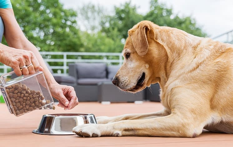 If you can no longer afford to feed and medicate your pet, you are at risk of committing an animal cruelty offence.